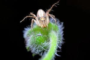 spin op zwarte achtergrond