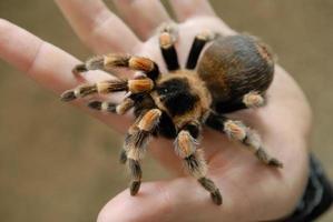 spin op een handpalm foto