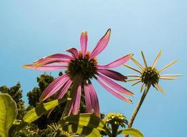 bloemen tegen de lucht