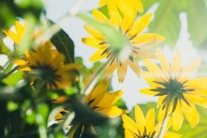 bloemen tegen hemel foto