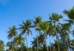 palm en lucht foto