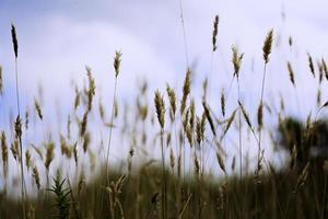 groen gras en blauwe lucht foto