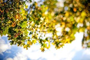 bladeren tegen de hemel foto