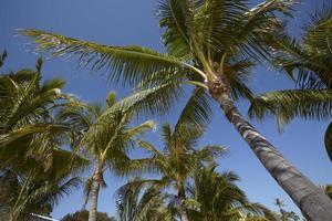 palmen met blauwe lucht