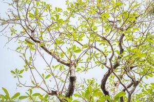 blauwe lucht en tak boom