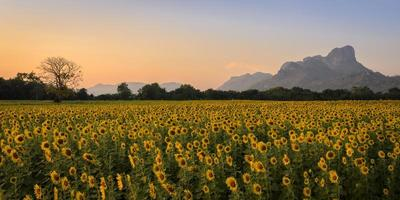 zonnebloem veld over blauwe hemel foto