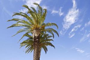 palm in de lucht foto