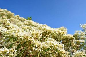 witte boom en blauwe hemel foto