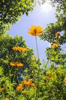 gele bloemen tegen de hemel