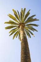 prachtige palmboom met blauwe zonnige hemel foto