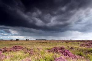 stormachtige lucht boven weilanden met heide