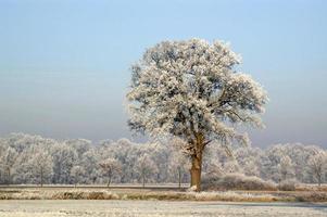 bevroren bomen met een blauwe lucht