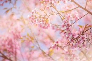 roze kersenbloesems tegen een blauwe hemel