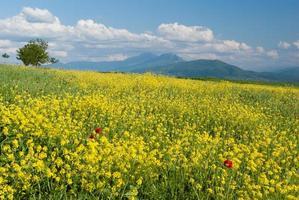 geel veld