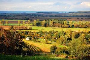 wijngaarden in de herfst