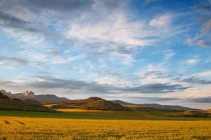 gele graanvelden bij zonsondergang. mooi licht en lucht