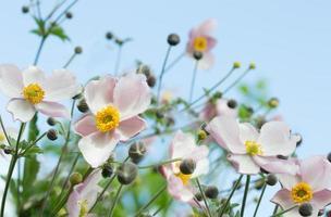 stadspark roze bloemen op blauwe hemelachtergrond foto
