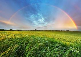regenboog over de lenteveld