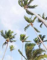palmboom foto