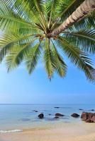 palmen boom foto