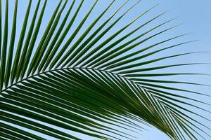 blad palmbomen