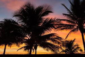 gouden palmbomen foto