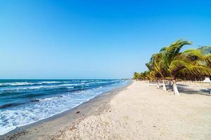 strand en palmbomen foto