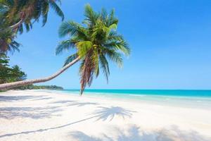 strand met kokospalm en zee foto