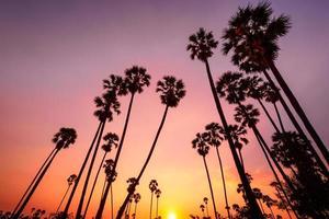 zonsondergang met kokospalm foto