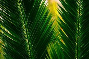 Palm bladeren foto