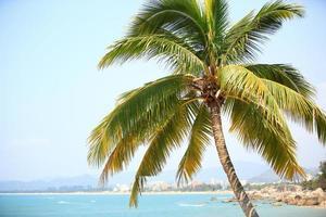 palmbomen op het strand, sanya foto