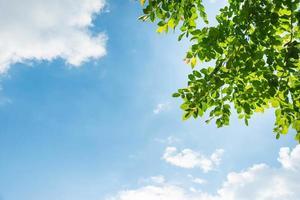 groene bladeren in de blauwe lucht