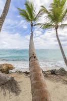 palmbomen op het strand. foto