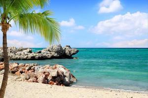tropisch strand met palmboom foto
