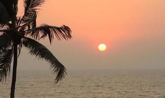 palmbomen silhouet bij zonsondergang foto