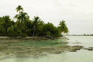 anaa palmen en koraalvlakken foto