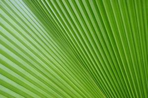 textuur van groen palmblad foto