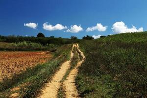 Cubaanse platteland foto