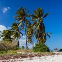 palm strand van maffia eiland foto