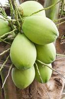 kokosnoot bos foto