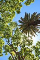 palmboom in een park van Lissabon foto