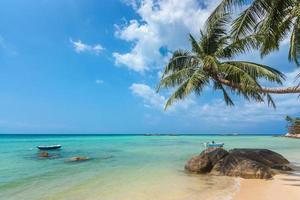 kokospalm die over het strand en de turkooise zee hangt foto