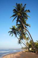 tropisch strand met kokospalmen foto