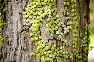 kleine groene bladbedekkende palm foto