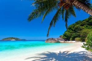 palmboom op een wit strand foto
