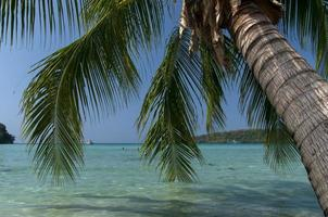 palmboom op strand in thailand foto