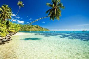 palmboom hangt boven een prachtige lagune foto