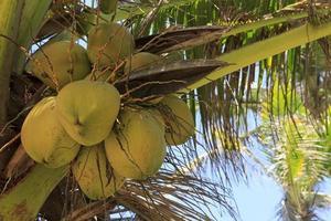 bosje kokosnoten foto