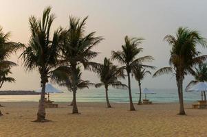 palmbomen op een leeg strand, dubai