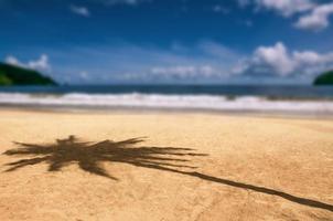 maracas baai trinidad en tobago strand palmboom schaduw caraïben foto